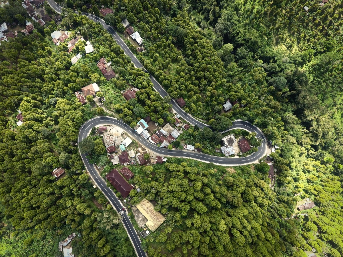 roads surrounded by greenery